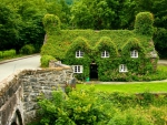 Ivy-Covered House in Wales