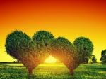 A Sunset Of Love