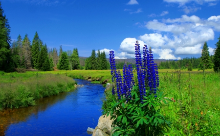 Small spring creek - stream, grass, fresh, beautiful, spring, creek, trees, sky, clouds, small, flowers, river