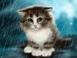 Kitten in the rain