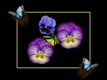 Pansies and Butterflies F1