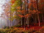 * Autumn forest *