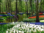 Springtime in Keukenhof Park, Netherlands