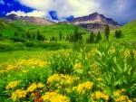 Mountain greenery