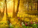 Morning Shining in Forest