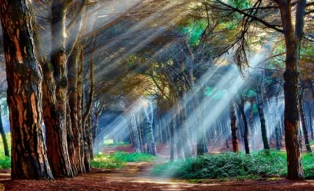 Meditation - forest, morning view, sunbeams, beautiful, trees, shrubs, leaves, peaceful, sun rays, meditation