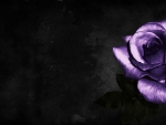 Purple Rose f