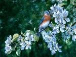 Bluebird in Blossoms F1