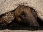 Dog and owl - Friends
