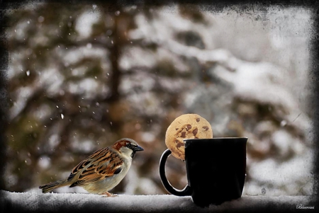 This looks tasty! - biscuit, brown, of, tea, winter, tree, coffee, bird, snow, with, hot drink, cup, garden, sparrow