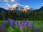 A Symphony In Mount Robson