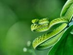 Exotic Snake 1