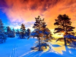 WINTER FROM NORWAY