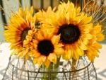 Beautiful Bouquet of Sunflowers