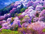 Mount Yoshino, Japan in Spring
