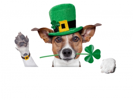 Happy Saint Patrick's Day - top hat, clovers, Saint Patricks Day, shamrocks, Happy Saint Patricks Day, Patricks Day, dog, hat