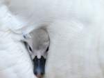 Maternal warmth
