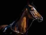 Bridled Horse F