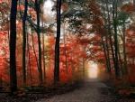 Autumn Path F