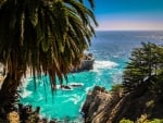 Palm Tree over McWay Cove in Big Sur