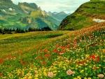 ALPINE FLOWER FIELDS