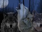 Wolves in Dark Woods