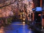 Spring in Gion