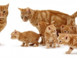 Cute family of ginger cats