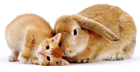 cute kitten and bunny - Cats & Animals Background ...