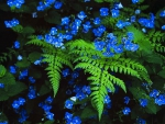 Fern and Blue Flowers