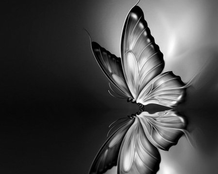 Black And White Butterfly Butterflies Animals Background Wallpapers On Desktop Nexus Image 1946240