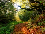 Sunlight on Forest Path