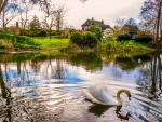 The Swan, The River And The Spring Cottage