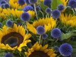 Sunflowers & Echinops