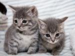 cute twins kittens