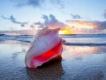 Sunrise Seashell
