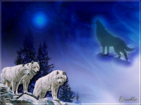 WOLVES BLUE NIGHT - BLUE, ANIMALS, STARS, SKY, NIGHT, MOON, TREES, HOWLING, WOLVES