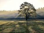 Tree - rays sun