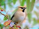 Bird on Berry Branch