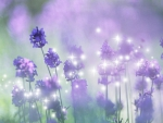 Fragrance of Lavender