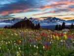 Sunset - mountain