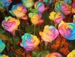 Dream Rainbow Roses