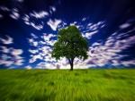 Hypnotic Tree