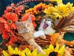pretty cats