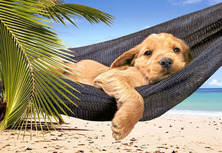 relax - beach, sweet, relax, dog