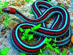 Colorful Snake