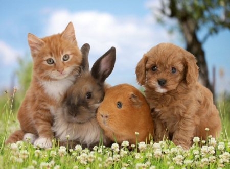 Friends of the family - family, freinds, bunny, cat, puppy, dog