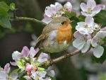 Small bird on the blosssoming tree