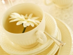 Flower in Tea cup