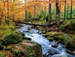 Bavarian Forest Creek
